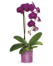 Dazzling Orchid Planter