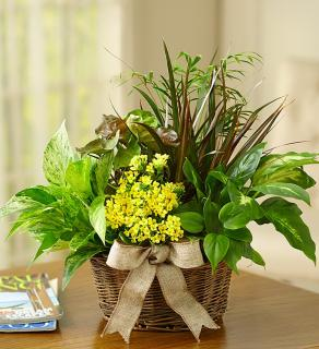Plants and Dish Gardens for the Home