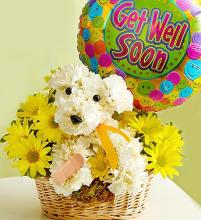 Sick As A Dog